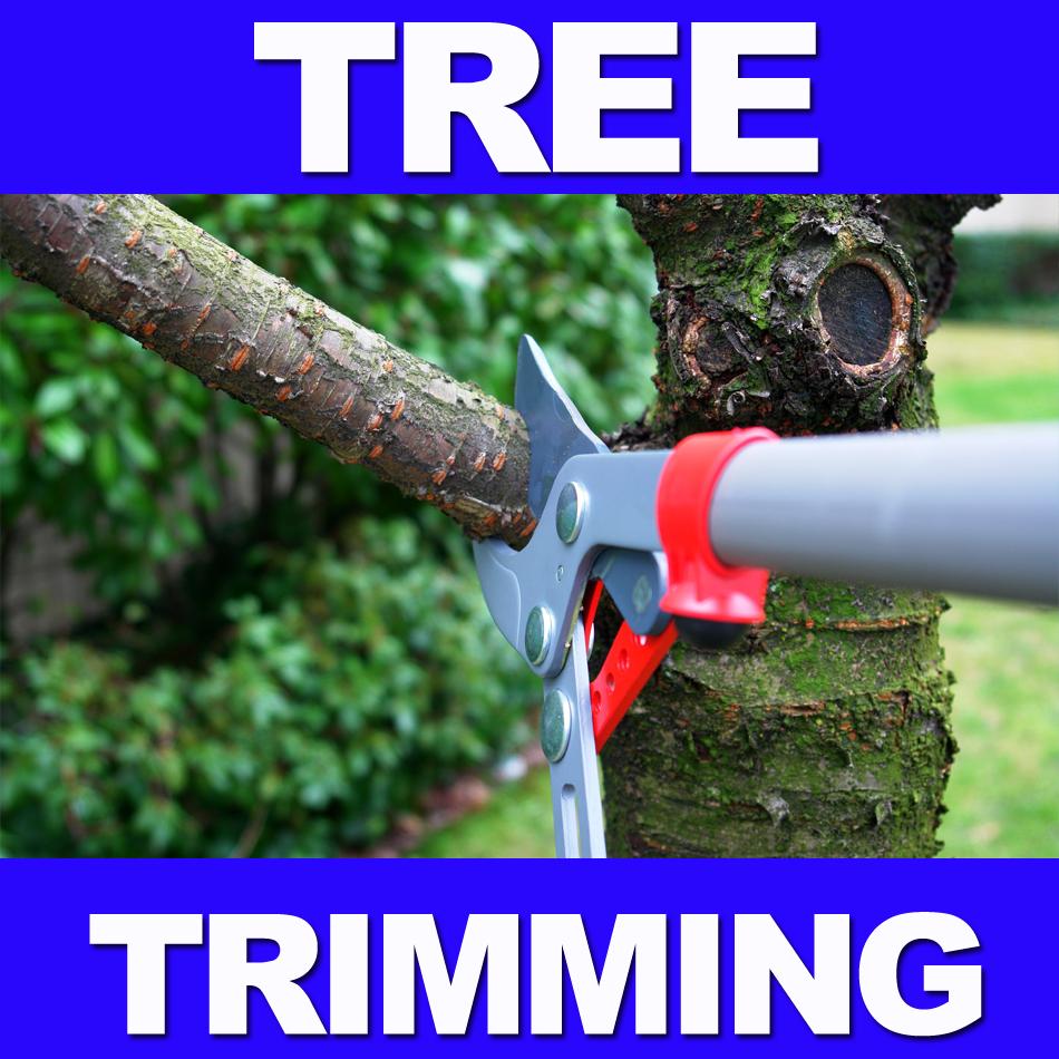TREE TRIMMING ARLINGTON TX