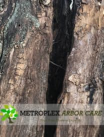 """Phytophthora"