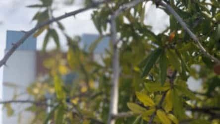 Tree Losing Leaves